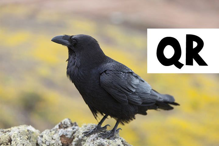Pet Names beginning with Q und R