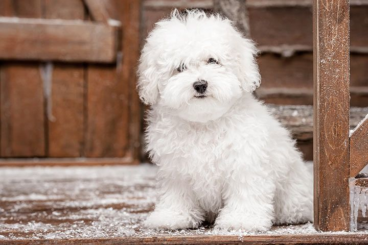Pet Names for White Animals