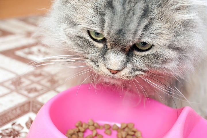 Cat with dry food