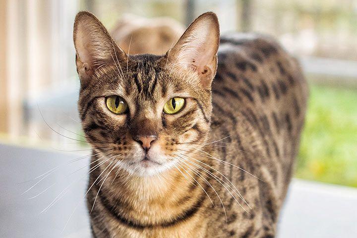 Antiallergene Katzen
