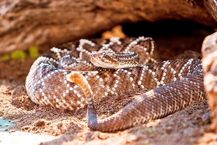 The Most Dangerous Venomous Snakes: Central and South America