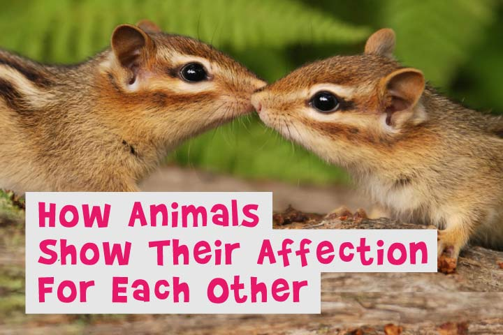 How Animals Show their Love