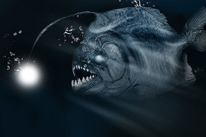 Deep Sea Anglerfish