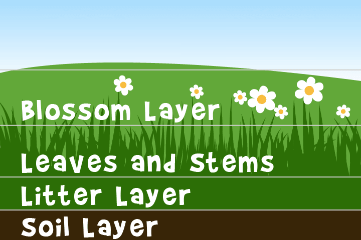 Layers in a meadow