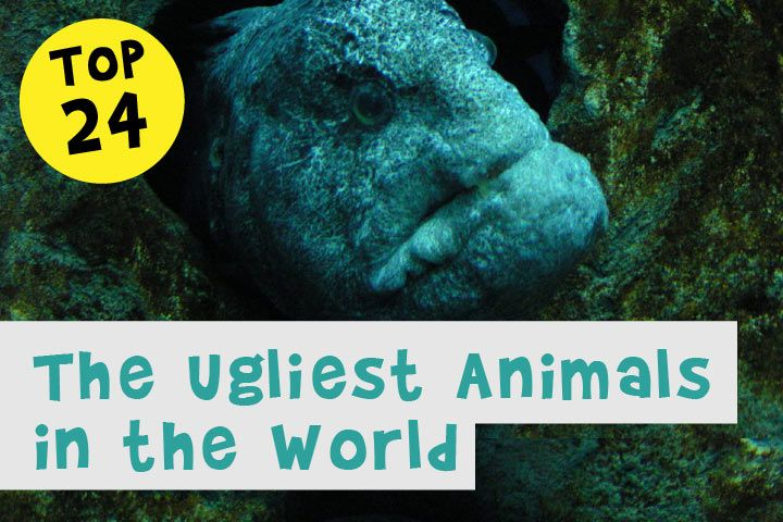 The Ugliest Animals in the World