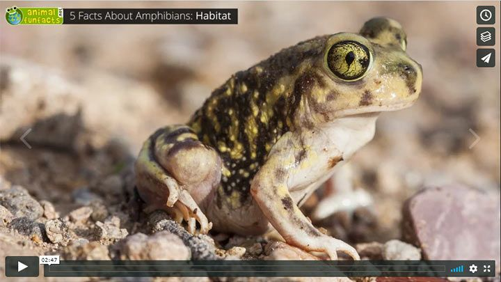 Video: All about Amphibians - Metamorphosis