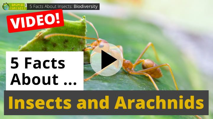 Video: All About Insects and Arachnids - 5 Interesting Facts
