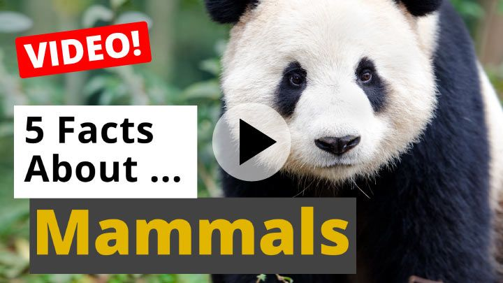 Video: All About Mammals - 5 Interesting Facts