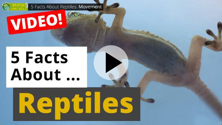 Video: All About Reptiles - 5 Interesting Facts