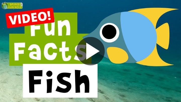 Video: Fish - Cartoon Fun Facts