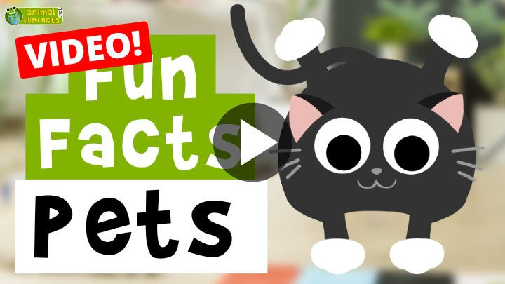 Video: Pets - Cartoon Fun Facts