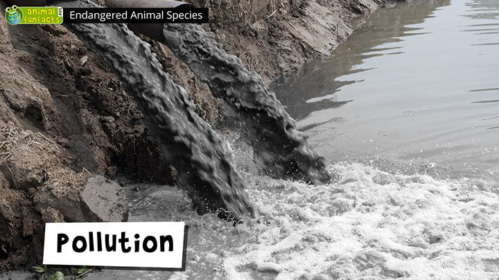 Video: Endangered Animal Species - Pollution