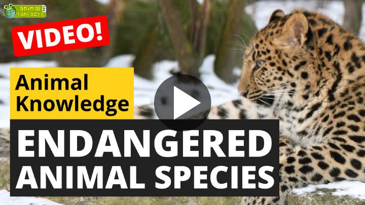 Video: Endangered Animal Species