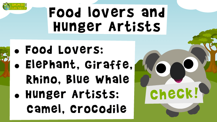 Video: Animal Food Lovers and Hunger Artists - Roundup!