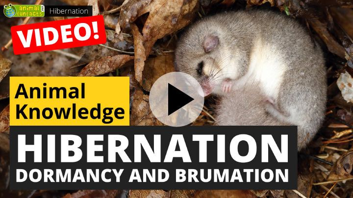 Video: All About Hibernation