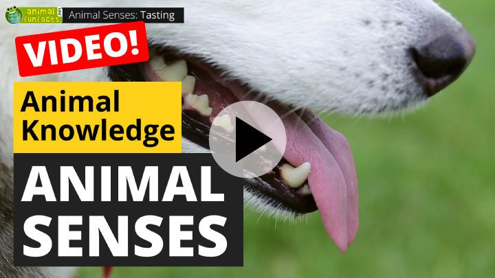 Video: All About Animal Senses
