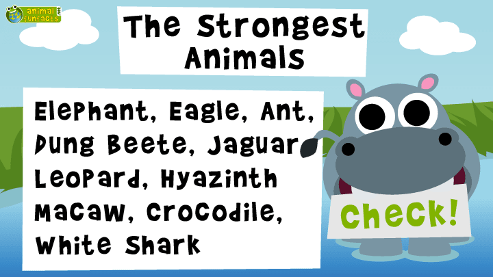 Video: The Strongest Animals - Roundup!