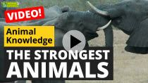 The strongest animals in the world
