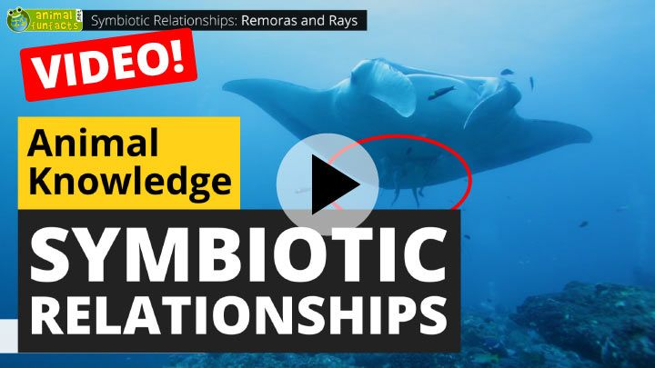 Video: Symbiotic Animal Relationships